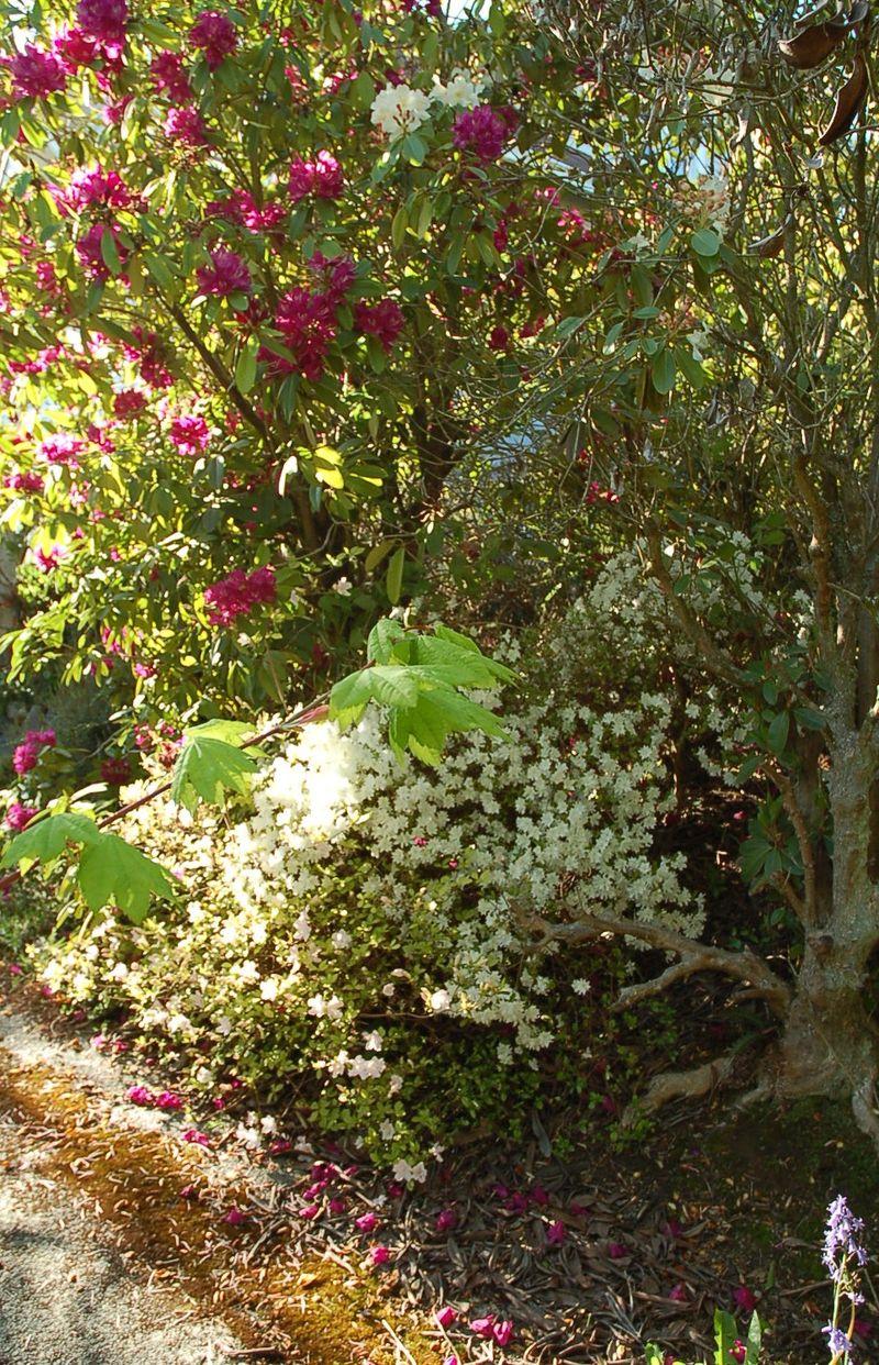 Grandys garden 1