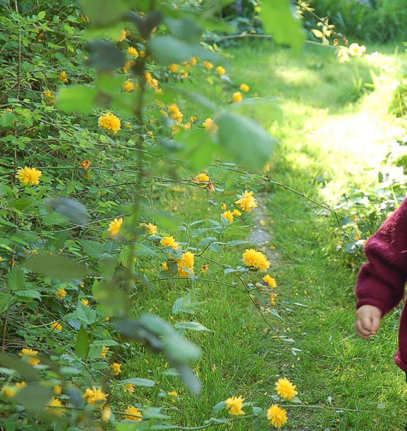 Jonny in grandys garden 2
