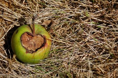 Apple_heart