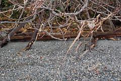 Dried_seaweed