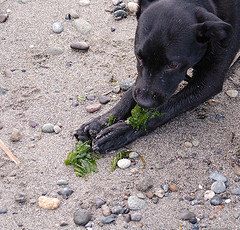 Zoey_with_seaweed_2