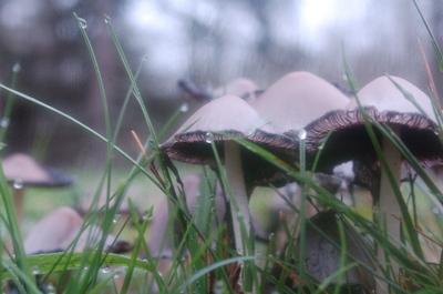 Mushroom_colony