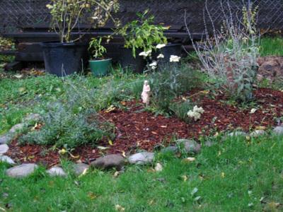 Autumn_herb_garden