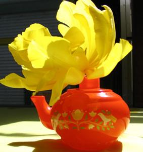 Double_tulip