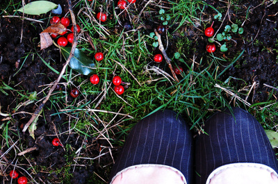 Holly_on_the_ground