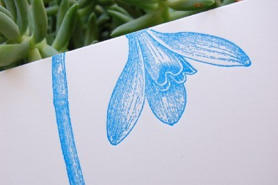 P2p_daffodil